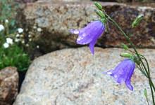 rainy_season_of_garden968_640360_2