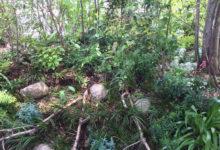 チクバ外科2ー三日月と森(芽吹き・深緑)