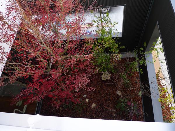 ニワマドのある庭461_雑木の庭