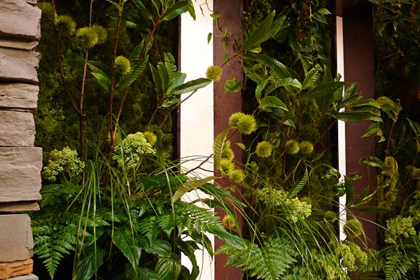 クリ_タテニワ壁面緑化