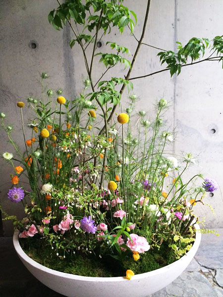 aimable_french_restaurant_flowers_and_tree2