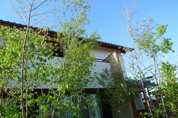 森と草屋根コナラ