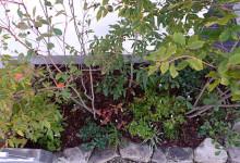 玄関前の雑木林