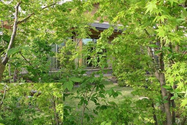 イロハの庭_道路より庭を見る
