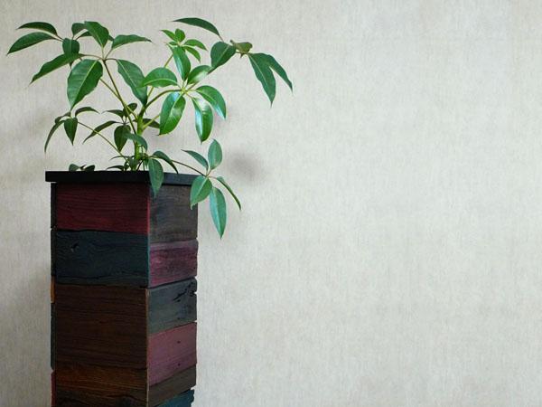 ツピタンサス_観葉植物_オリジナルプランター