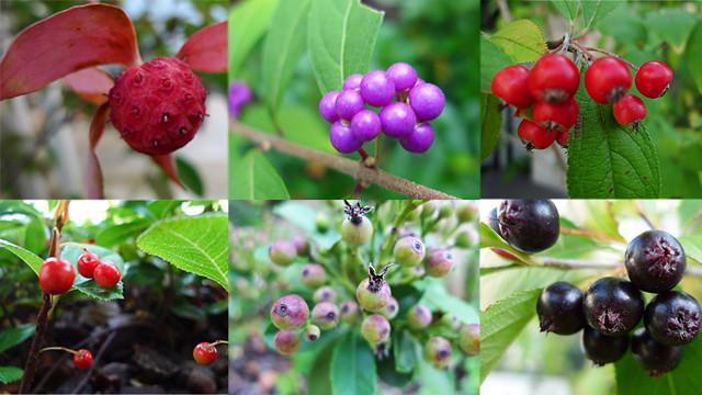 秋の庭_アイキャッチ